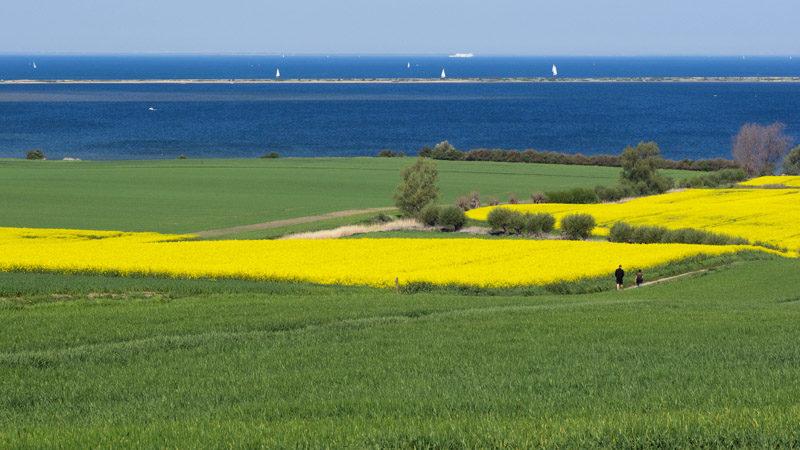 Foto: Ostseeküste bei Kühlungsborn M-V, LRT 1160, flache große Meeresarme und -buchten