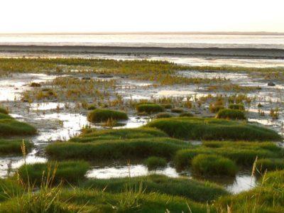 Foto: Wattenlandschaft an der Nordsee in Neuharlingersiel (Ostfriesland), LRT u.a. 1320, Watt mit Schlickgrasbeständen, Quelle: pixabay