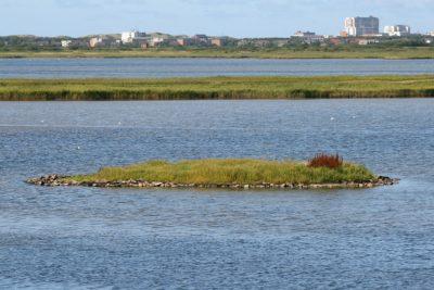 Foto: NSG Rantumbecken Sylt (EU-Code 1115-301), Vogelschutzgebiet mit Brutinsel