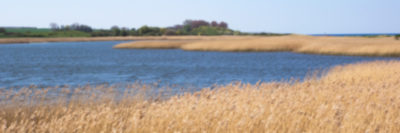 Naturschutzgebiet Riedensee - Ostsee