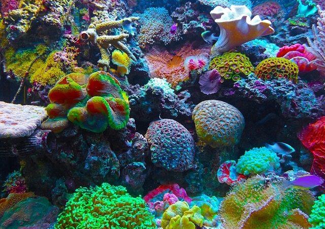 Foto: Lebensraum Korallenriff, Quelle: Pixabay