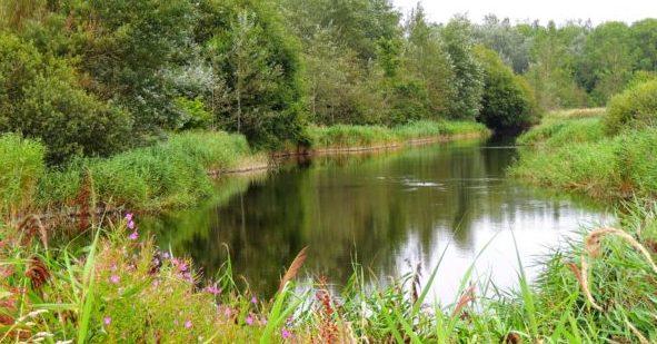 Foto: Naturerlebnisraum Katinger Watt im Nationalpark Schleswig-Holsteinisches Wattenmeer | NABU/Sophia-Fatima Freuden